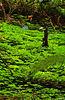 Typical fern/sorrel covered floorscape.