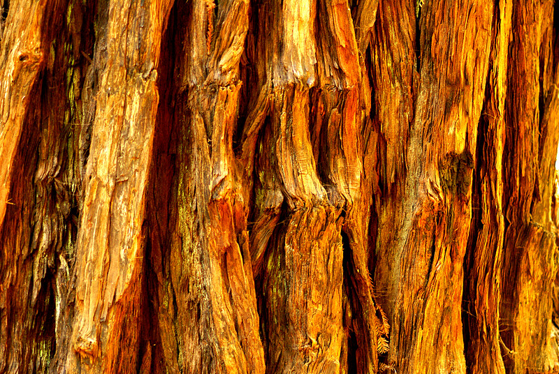 The many shades of the redwood bark.
