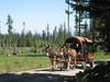 Mule Train - East Cascades near Elensburg, WA
