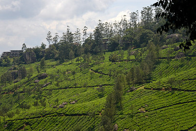 "Munnar is an attractive destination with the world's best and renowned tea estates. There are more than 50 tea estates in and around Munnar. Most of the plantations are taken over by the Tata Group. Some of the major tea estates in Munnar include Harrison Malayalam, AVT tea, Michael's tea, Brooke Bond etc. It is one of the biggest centers of tea trade in India. Tea or Chai is the most widely drunk beverage in the whole world. The tea plant, Camellia Sansis, is a cultivated variety of a Tea planttree that has its origins in an area between India and China.   Munnar ( മുന്നാർ ) is situated on the Kannan Devan Hills ( KDH ) Village in Devikulam taluk. Munnar is a famous hill station on the Western Ghats of India. A range of mountains situated in the Idukki district of the Indian state of Kerala. The name Munnar means ""three rivers"", referring to the town's strategic location at the confluence of the Madhurapuzha, Nallathanni and Kundaly rivers."