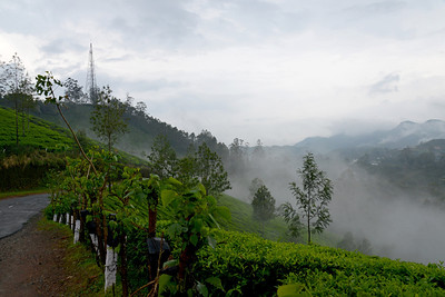 """Munnar is an attractive destination with the world's best and renowned tea estates. There are more than 50 tea estates in and around Munnar. Most of the plantations are taken over by the Tata Group. Some of the major tea estates in Munnar include Harrison Malayalam, AVT tea, Michael's tea, Brooke Bond etc. It is one of the biggest centers of tea trade in India. Tea or Chai is the most widely drunk beverage in the whole world. The tea plant, Camellia Sansis, is a cultivated variety of a Tea planttree that has its origins in an area between India and China.   Munnar ( മുന്നാർ ) is situated on the Kannan Devan Hills ( KDH ) Village in Devikulam taluk. Munnar is a famous hill station on the Western Ghats of India. A range of mountains situated in the Idukki district of the Indian state of Kerala. The name Munnar means """"three rivers"""", referring to the town's strategic location at the confluence of the Madhurapuzha, Nallathanni and Kundaly rivers."""