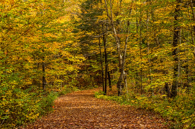 A road to one of the parks Lodges.