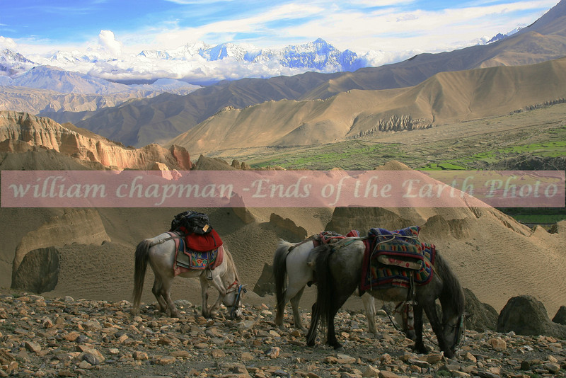 Horses taking a rest on high pass. Himalayan range in the background looking south.