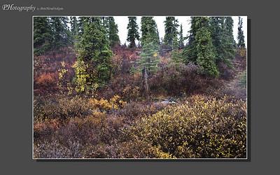 My Alaska 12-08-048
