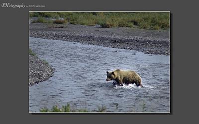 My Alaska 12-08-023