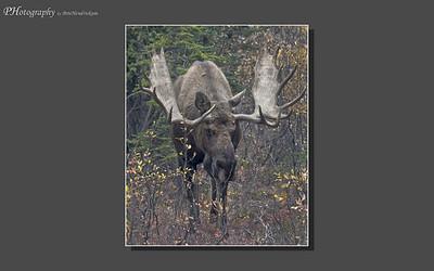 My Alaska 12-08-046
