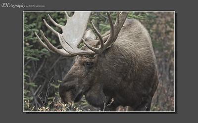 My Alaska 12-08-045
