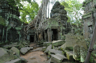 Roots of a silk cottonwood tree infecting the 12th century temple of Ta Phrom, Angkor, Cambodia.
