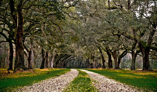 I really wanted to capture a scene of a nice, long plantation driveway, with spanish moss abound. I almost got it. Not quite.