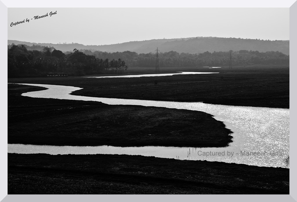 Water snakes through the fields in the hinterlands of Goa
