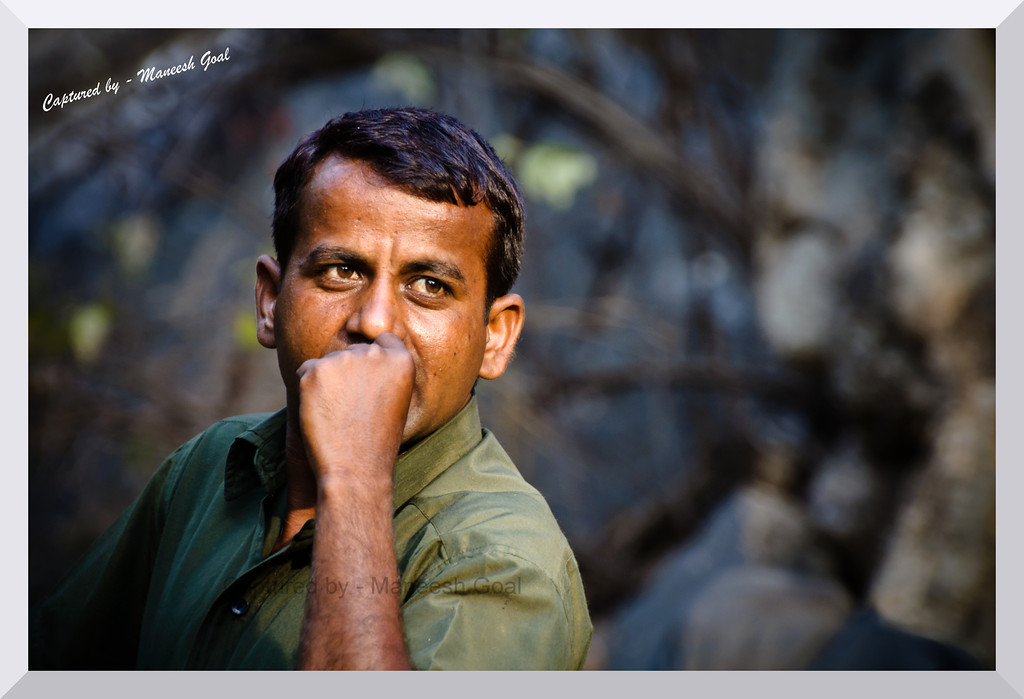 A forest guide waits for the pair of mating tigers (T-39 female & T-24 male) to emerge from the bushes