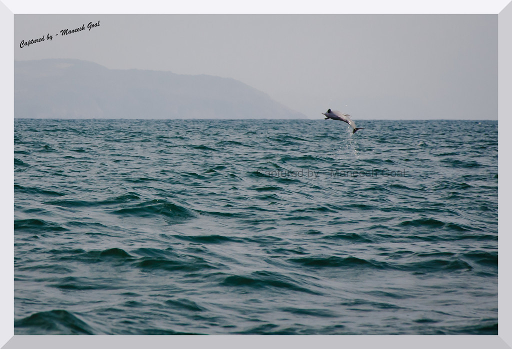 Spinner Dolphin in the wild, at high seas off Palolem Beach!