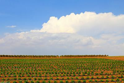 Smart farming..