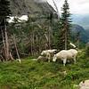 logan highline trail 10_edited-1