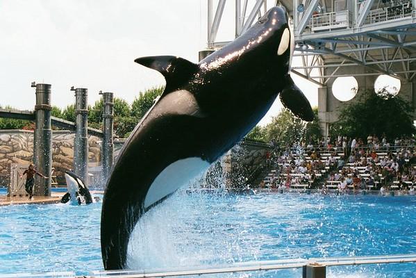 May 2001 Seaworld