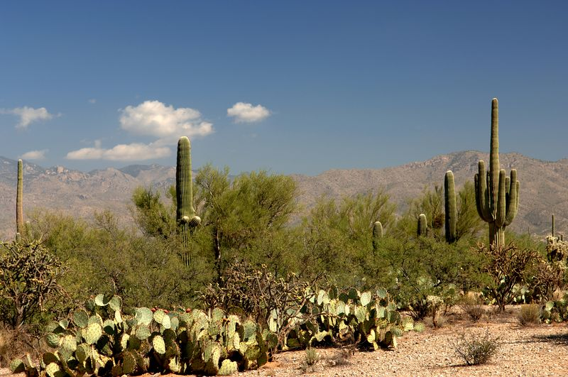 "October 2005 <a href=""http://adejoie.smugmug.com/gallery/902029_5XjDt"">Saguaro National Park</a>"