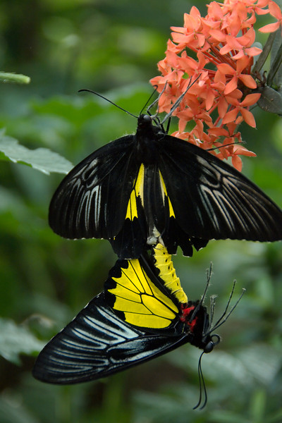 "October 2007 <a href=""http://adejoie.smugmug.com/gallery/3890191_Z9AcN"">Niagara Falls Butterfly Café</a>"