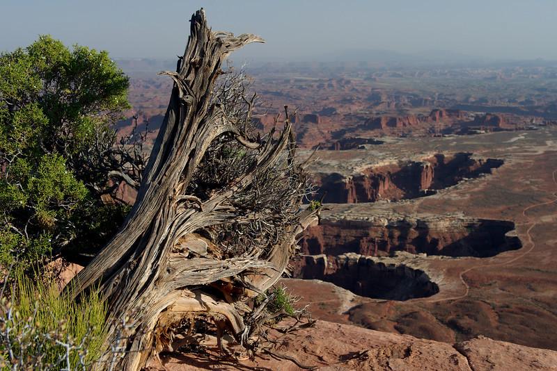 """Oct 12 2008 <a href=""""http://adejoie.smugmug.com/gallery/6399225_d8gkQ"""">Canyonlands National Park</a>"""