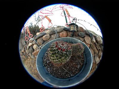 cactus 2 024