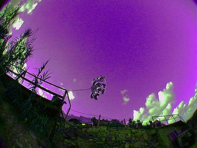 balloons-purple-sky 2 027