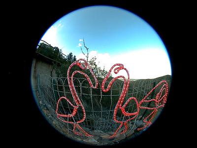 flamingo-infatuation 2 025