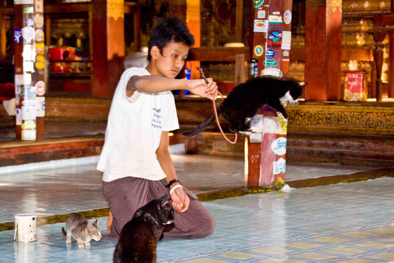 The Famous Jumping Cats of Nga Phe Kyaung Monastery. (Monks taught cats to jump through hoops on command!)