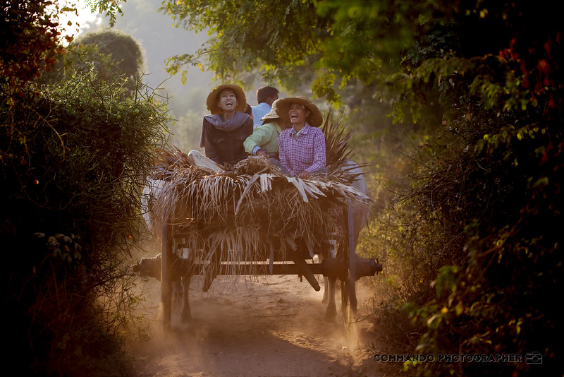 Two women laugh as they bounce along in an ox-drawn cart.