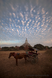 A horse cart driver waits for his passengers.