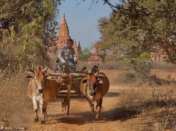 A bullock cart near Dhammayangyi Pahto, Bagan, Myanmar, 2 February 2013