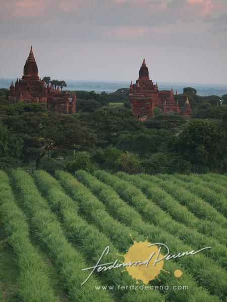 Fields and pagodas