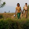 Two women make their way home from the rice fields.