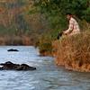 Watching the buffalo swim.