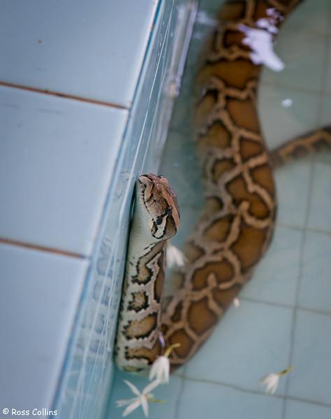 Paleik Snake Monastery - Mandalay