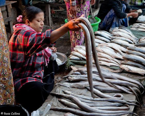 Sittwe Fish Market