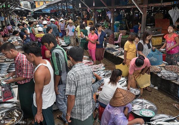 Dawei Fish Market, Tanintharyi Region, Myanmar, 9 October 2015