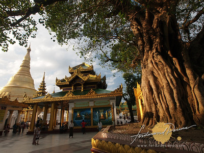 Shwedagon Pagoda Bodhi Tree