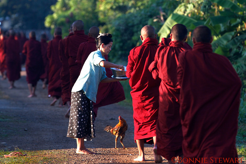 Buddhas early morning walk as villagers offer rice to them