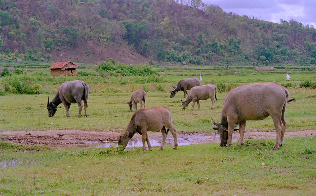 Myanmar Hsipaw 073
