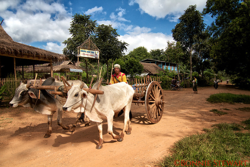 Local transportation to the market