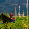 Rowing to the floating markets, Inle Lakes