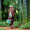 Walking  home from the market among the bamboo forests