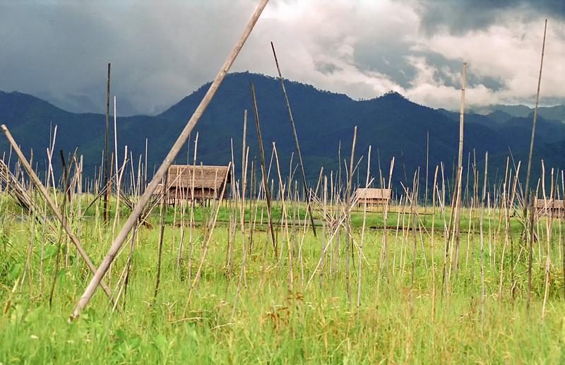 Myanmar Inle Lake 145