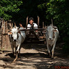Traditional transportation in local villages