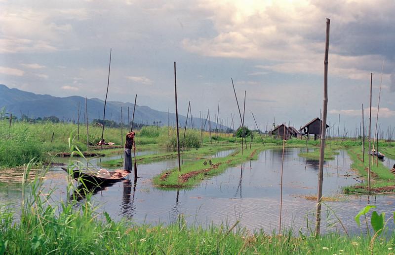 Myanmar Inle Lake 123