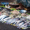 Fish Market 1 Yangon