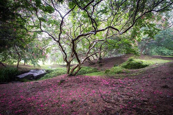 Myeongokheon Garden