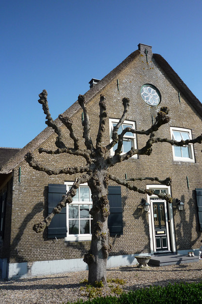 Mutant trees invade The Netherlands