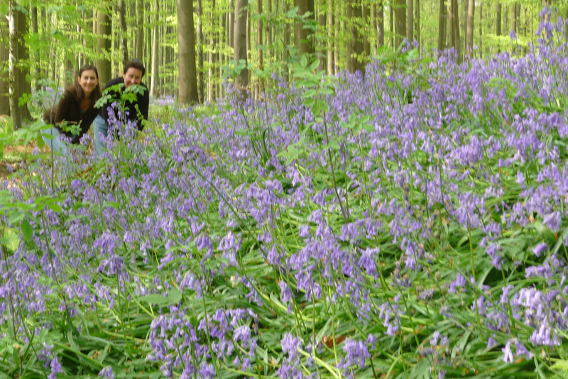"""""""This place is so bluebellye"""""""