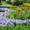 Kukenhof Gardens/Netherlands