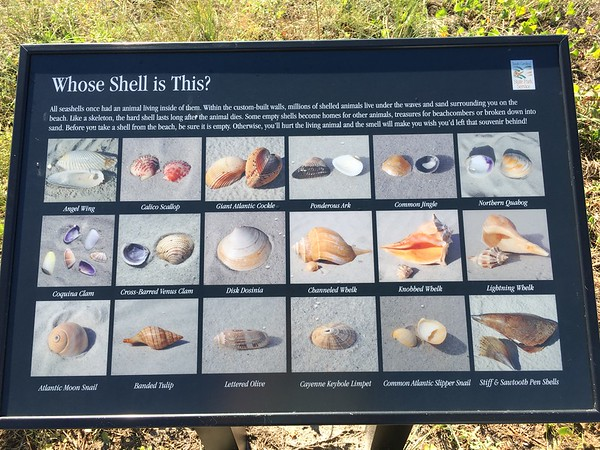 Shell guide!